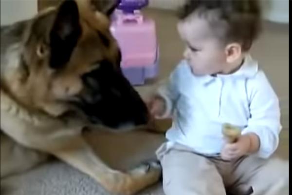 Cane Pastore Tedesco con un bambino