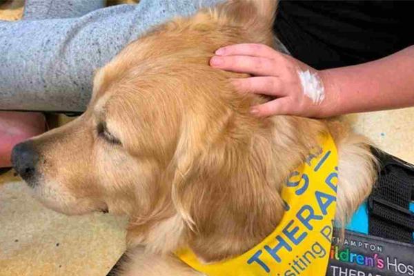Cane da Pet Therapy