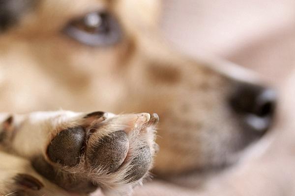 Coronavirus, non lavare le zampe dei cani con Amuchina e candeggina: ecco perché
