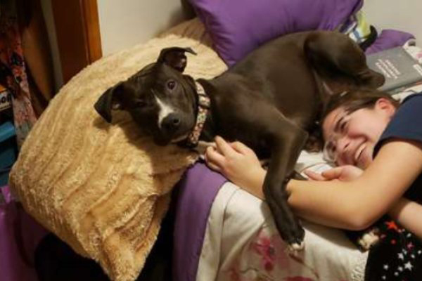 Roxy, il cagnolino che ha riabbracciato la sua famiglia dopo diversi mesi