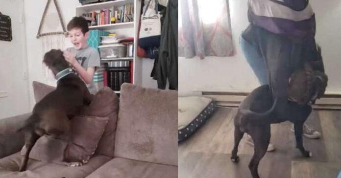 Cane che salta con un ragazzo