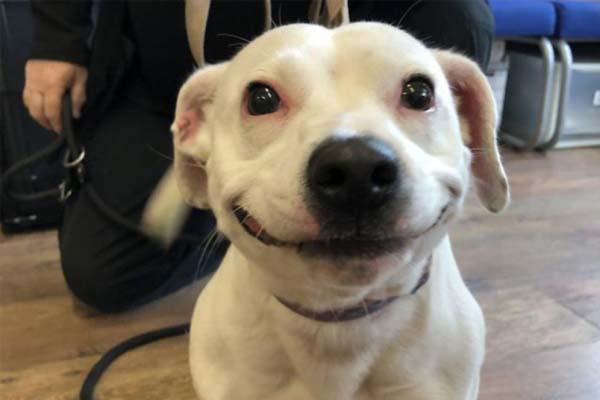 Cagnolina che sorride