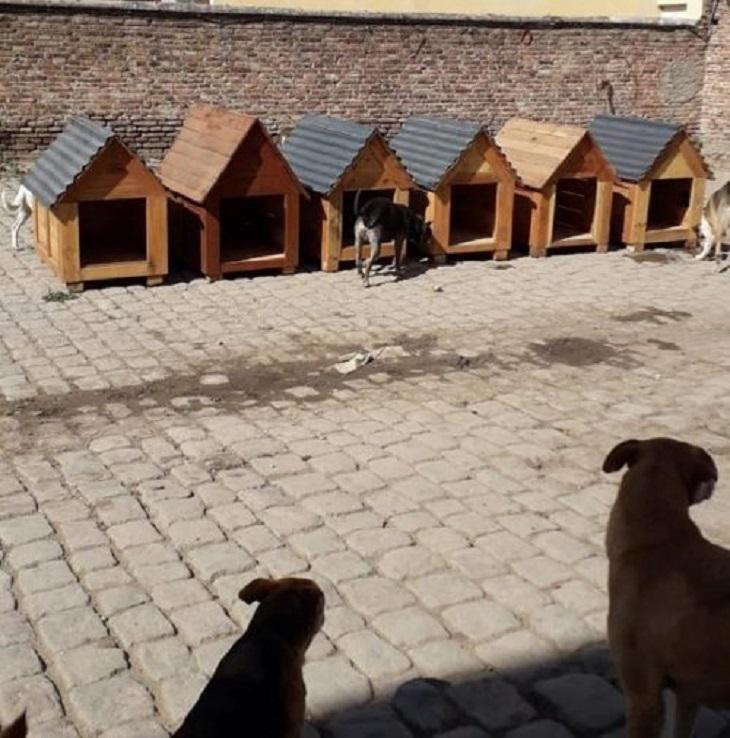 I cani del rifugio ricevono nuove cucce costruite dai detenuti