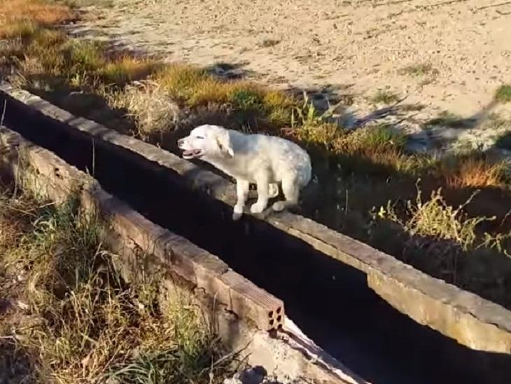 cane-abbandonato-corsa-estate