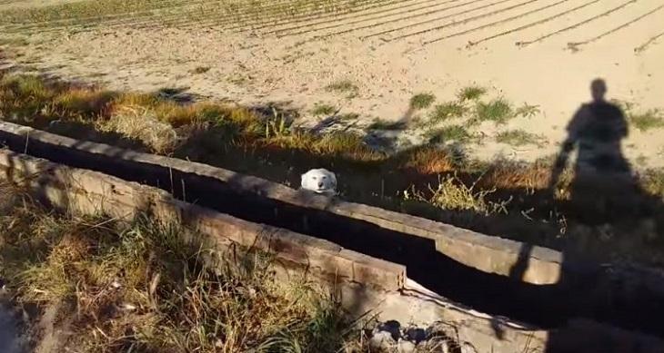 cane-abbandonato-grecia
