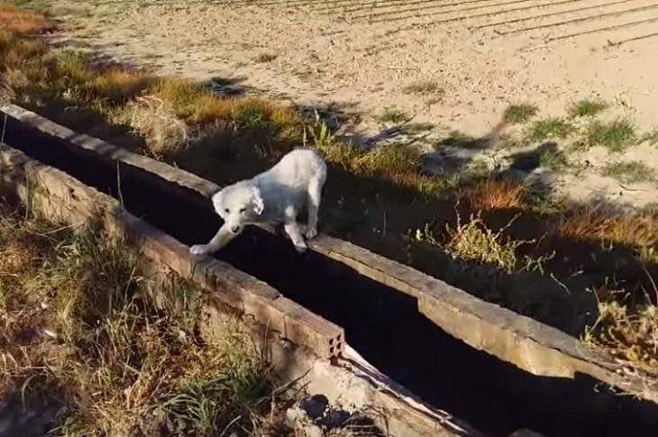 cane-abbandonato-solitudine