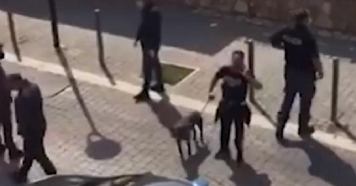 cane-ladispoli-fermo