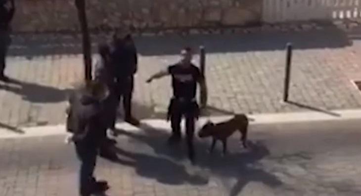 cane-ladispoli-passeggiata