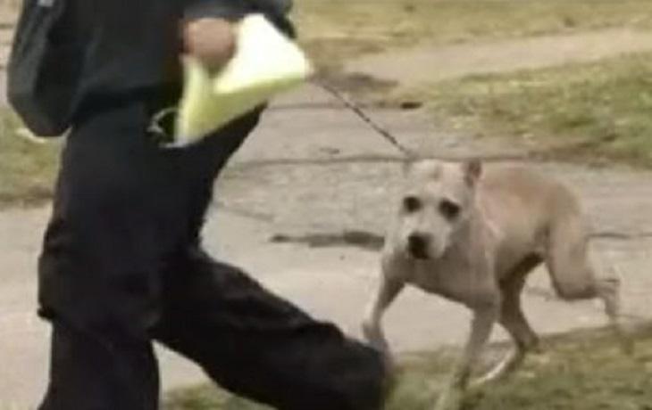 combattimento-salvataggio-cani