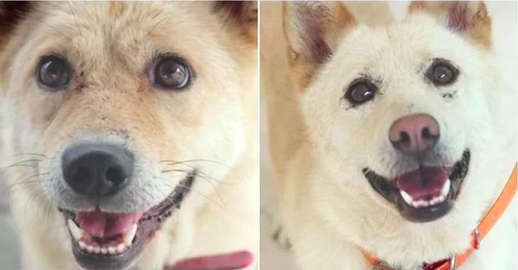 Due cuccioli abbandonati chiedono aiuto per salvare la loro sorellina