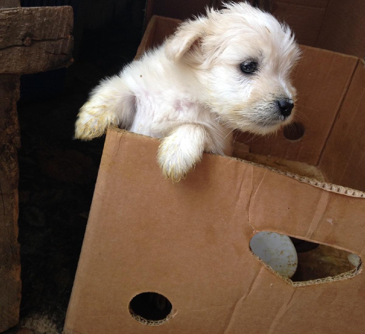 cucciolo-cartone