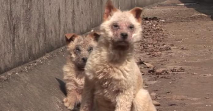due-cuccioli-abbandonati-chiedono-aiuto-per-salvare-la-loro-sorellina