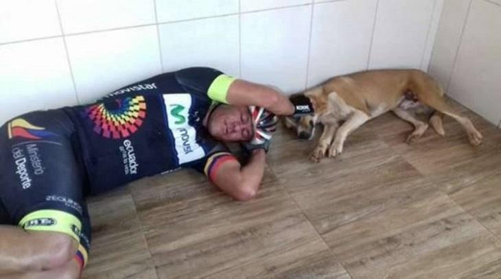 guerrero-adozione-cane