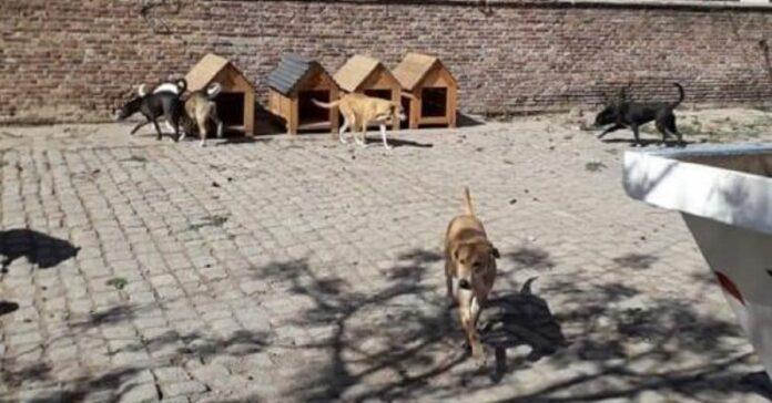 i-cani-del-rifugio-ricevono-nuove-cucce-costruite-dai-detenuti