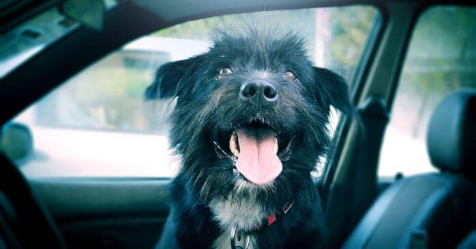il-cane-solo-dentro-lauto-fa-finire-la-vettura-nella-piscina-video