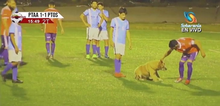 irruzione-cane-campo
