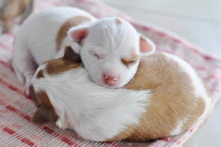 Il salvataggio di Matilda, il cane Pit bull che lottava per i suoi cuccioli