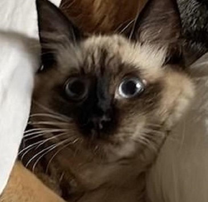 mochi-sguardo-gatto
