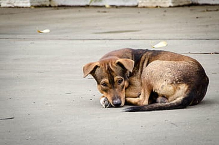 motociclista-cane-abbandono
