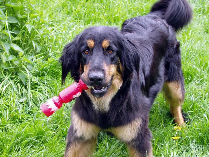penny-cani-svago