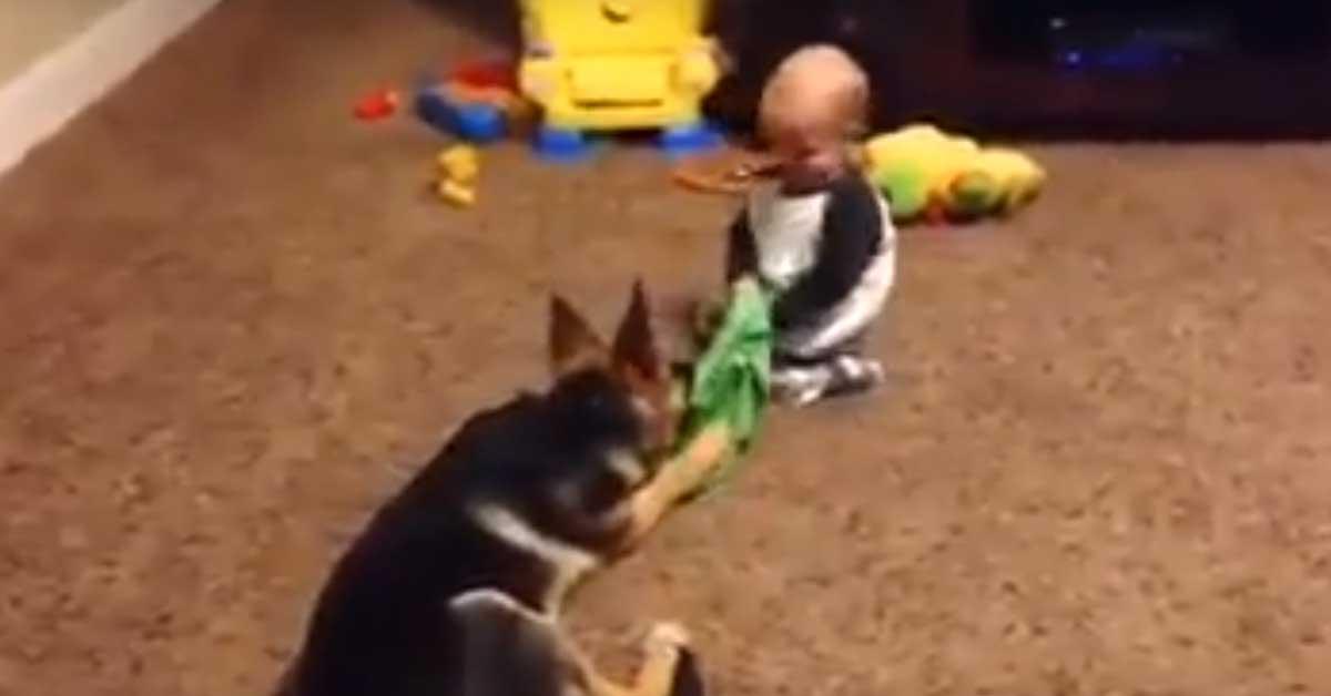 Pastore Tedesco che gioca con un bambino