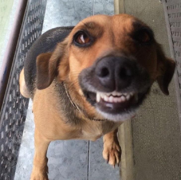 Cagnolina dal veterinario, la sua tenera reazione (VIDEO)