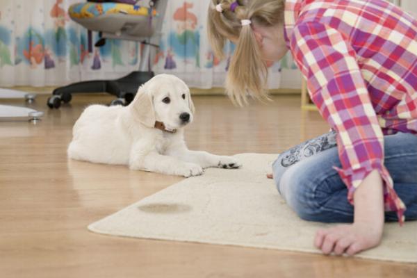 Cucciolo di cane, dove fargli fare pipì per evitare cattive abitudini
