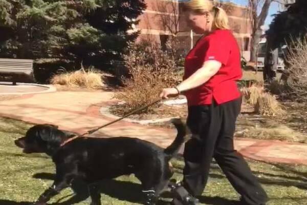 cane cammina con protesi