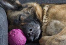 cane vuole dormire