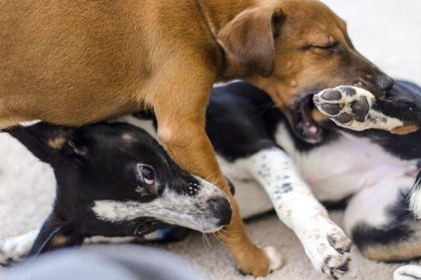 cucciolo cane che morde