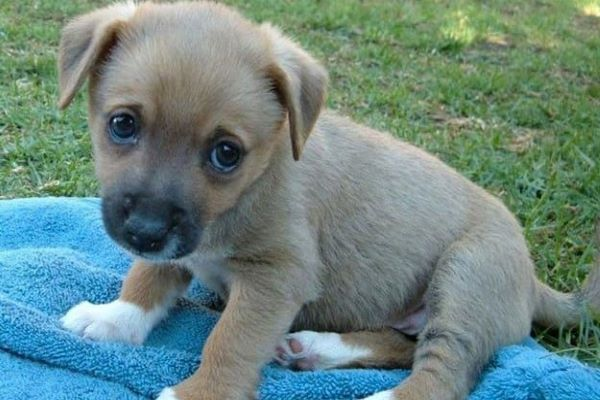 cucciolo di cane come gestirlo