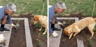 Cane che scava in giardino