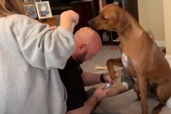 Jax è un cane che non vuole tagliate le unghie e il suo padrone si riempie la testa di formaggio per distrarlo (video)
