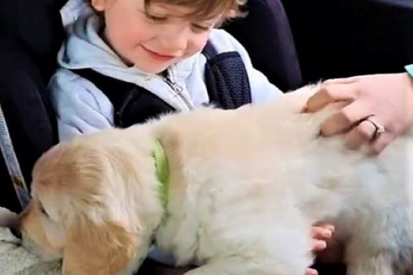 marley cane bambino video