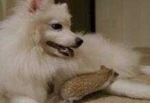 Cagnolino e riccio