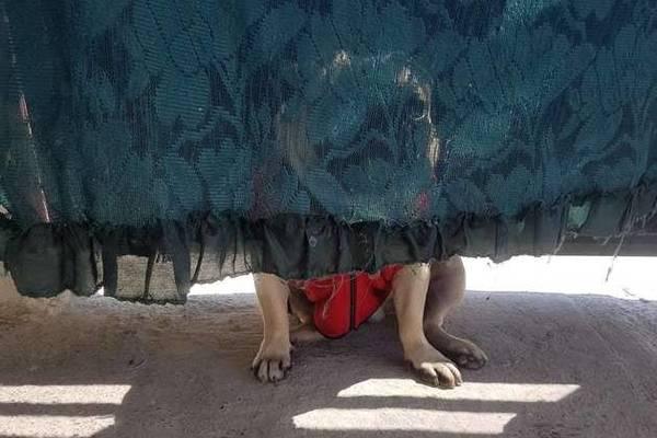 cane dietro la tenda