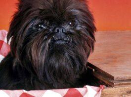 cagnolino nero dentro una cesta