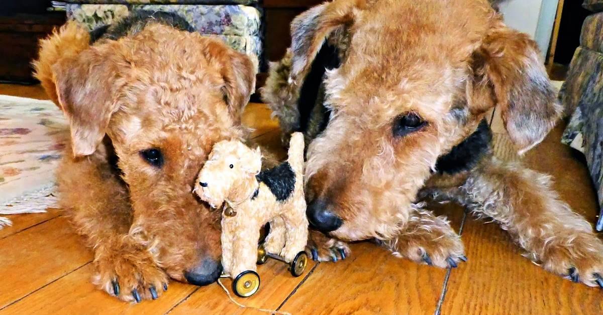 cani che giocano con un pupazzo