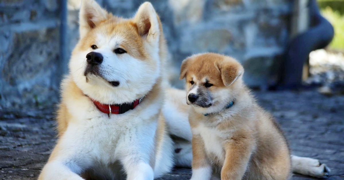 mamma con il suo cucciolo