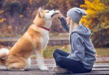 una ragazza dà da mangiare al suo cane
