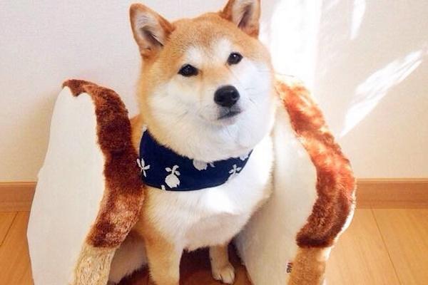 cane con una fascia sul collo
