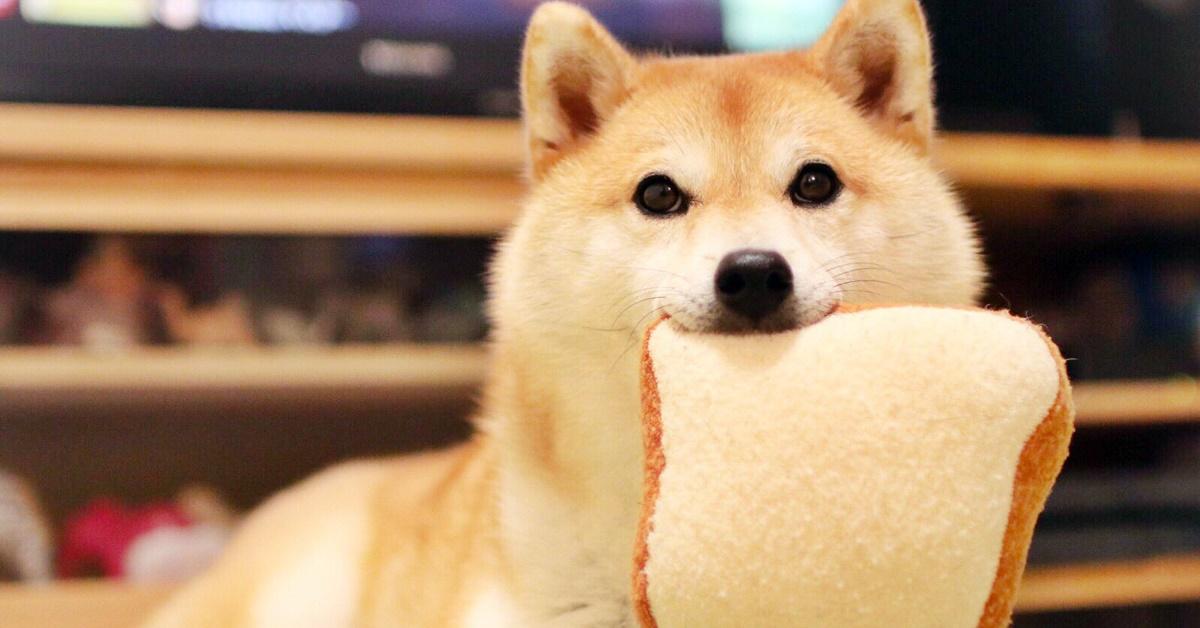 cane che mangia una fetta di pane