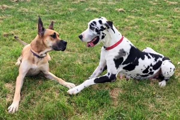 cani che fanno amicizia