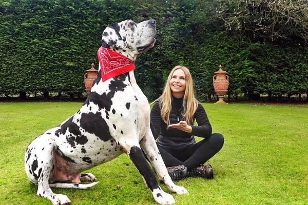 Alano come primo cane: difficoltà di gestione, pro e contro