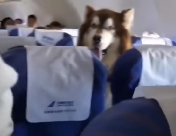 cane supporto proprietario a fianco