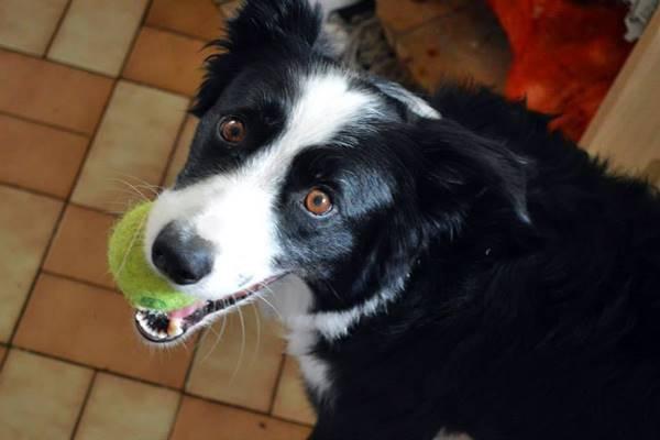 cane con la sua pallina preferita