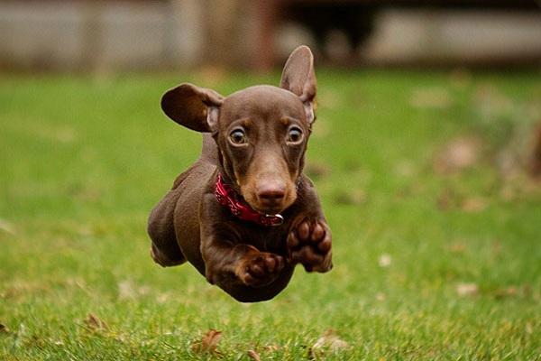 cucciolo di cane sembra pazzo