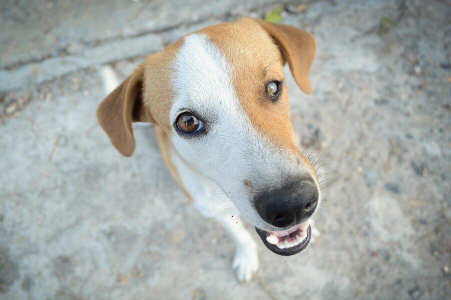 cane con un occhio cieco