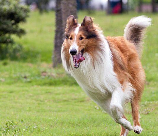 cane corre su un prato