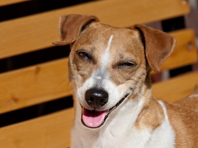cane con la faccia buffa